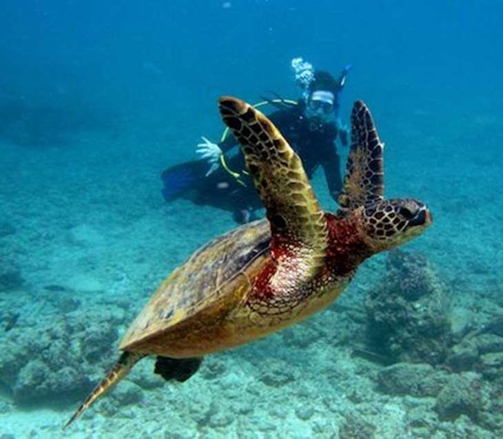 подводное плавание с черепахой