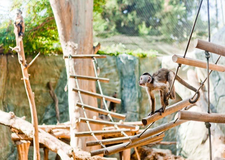 местный зоопарк Лимассоло